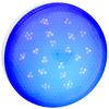 Ecola GX53 LED color 8,0W Tablet 220V Blue Синий матовый поликарбонат (композит) 28x74