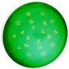 Ecola GX53 LED color 8,0W Tablet 220V Green Зеленый матовый поликарбонат (композит) 28x74