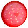 Ecola GX53 LED color 8,0W Tablet 220V Red Красный матовый поликарбонат (композит) 28x74